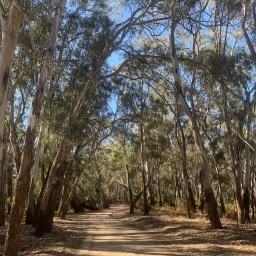 Travel diary – The Riverina, NSW